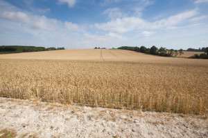 MRiRW wskazało na jakich obszarach występuje susza rolnicza