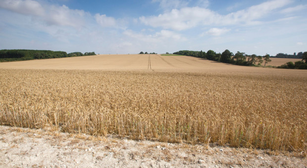 ARMiR: 450 mln zł na kontach rolników wz. z pomocą suszową