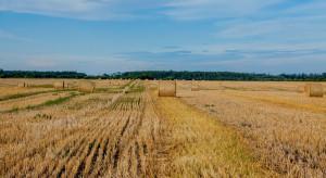 Rolnicy nie zgadzają się z raportami suszowymi IUNG