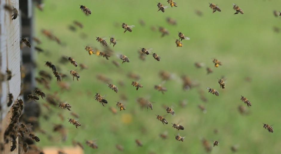 Parlament Europejski żąda większej ochrony pszczół