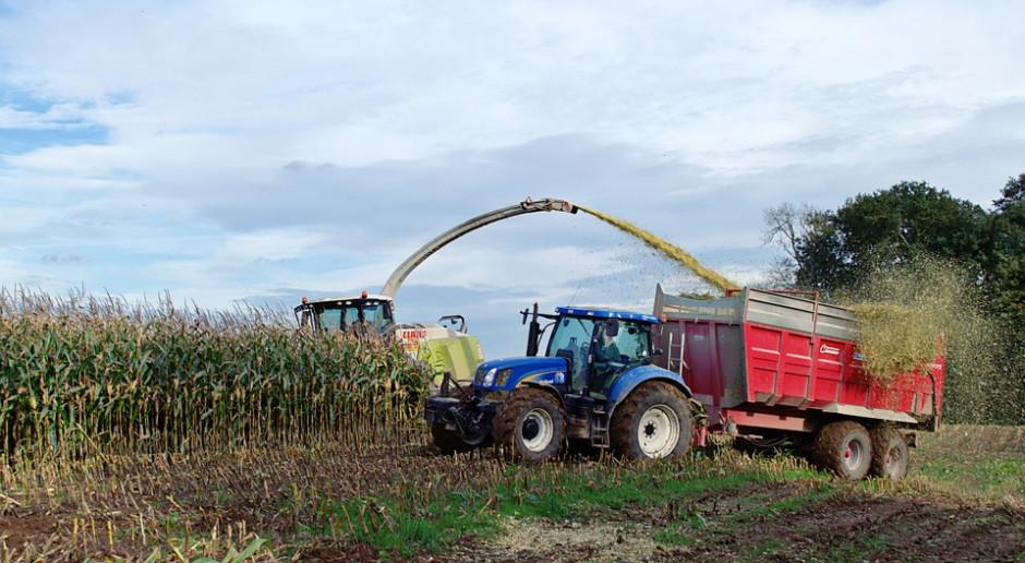 Niemcy: Susza zmniejszyła plony kukurydzy na kiszonkę