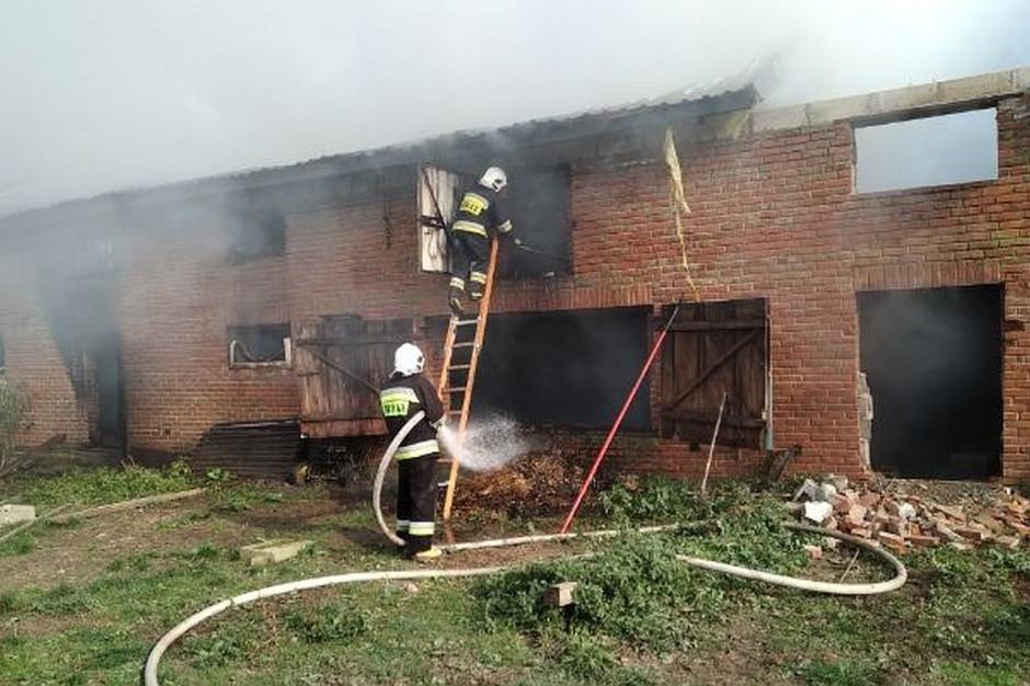 Pożar gasiło 12 zastępów strażackich z terenu powiatu, Foto: PSP Kraśnik