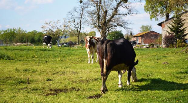 Kontrola weterynaryjna. Jakie prawa ma rolnik, a jakie inspektor?