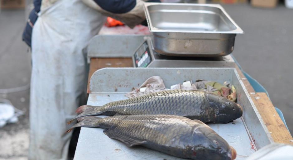 Trwają odłowy karpia na wigilijne stoły. Ceny ryb nie wzrosną znacząco