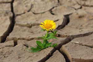Pomoc po suszy otrzymały 73 tysiące rolników