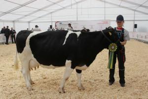 Czempion w kategorii krowy rasy polskiej czarno-białej (ZB)