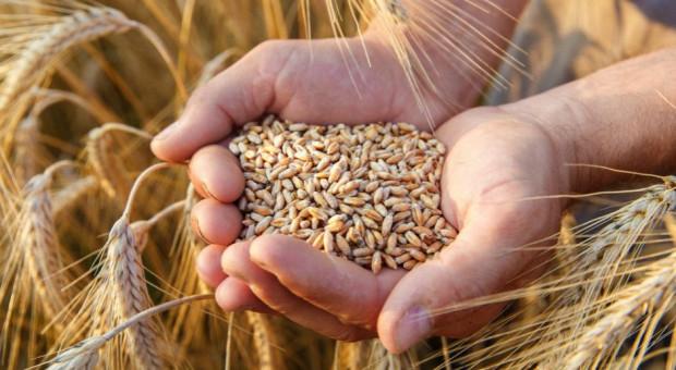 Ceny zbóż cały czas stabilne