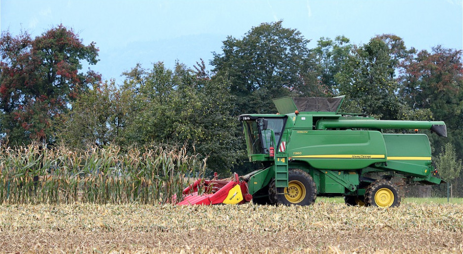 Kukurydza na ziarno: Zbiory są opóźnione, import wysoki