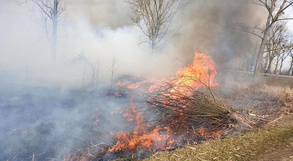 Spłonęło 5 hektarów łąk i nieużytków wokół stawów
