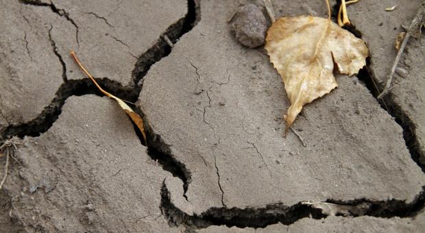 Licznik pomocy suszowej i de minimis wciąż chodzi – ale porusza się niewiele