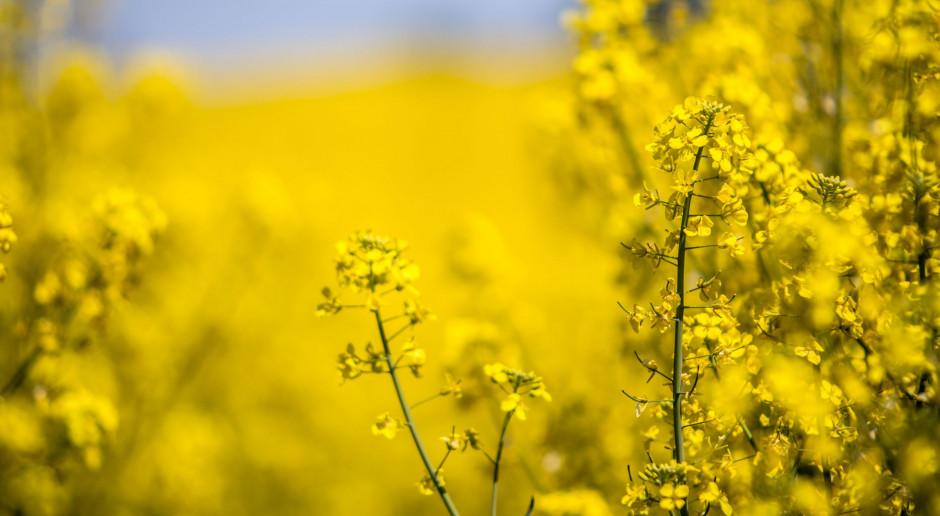 Poekstrakcyjna śruta rzepakowa jako alternatywa dla importu soi