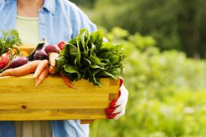 Rolnikom nie opłaca się ekologia