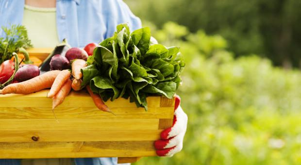 Mniej producentów, ale zwiększa się powierzchnia ekologicznych użytków rolnych