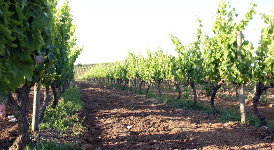 Komisja wskazała 20 priorytetowych agrofagów kwarantannowych