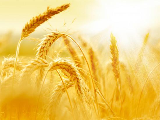 Wzrost cen zbóż i oleistych na światowych giełdach - podsumowanie października