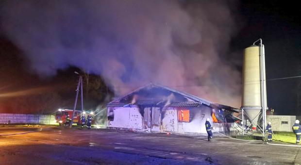 Spłonął kurnik, na kurczaki zawalił się dach