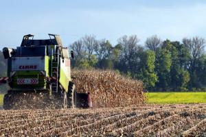 Rosja: Do 11 listopada zebrano 124,3 mln ton zbóż i bobowatych
