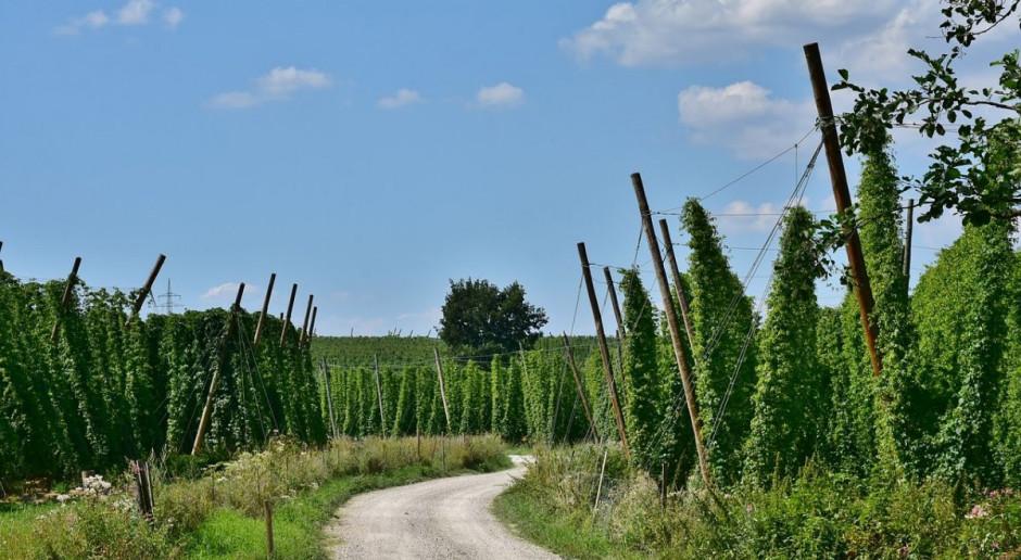 Podniesienie akcyzy na piwo odbije się na rolnikach. Browary Polskie krytykują rządowy pomysł