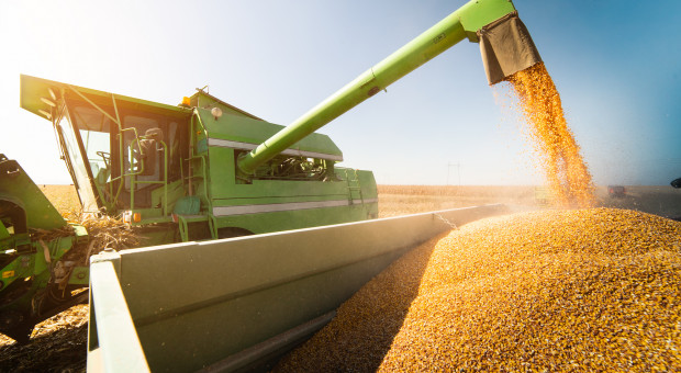 IGC: Spadek prognozy światowej produkcji zbóż ogółem