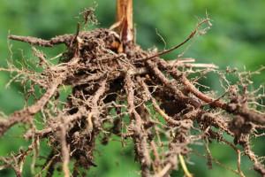 Co warto wiedzieć o swojej glebie?