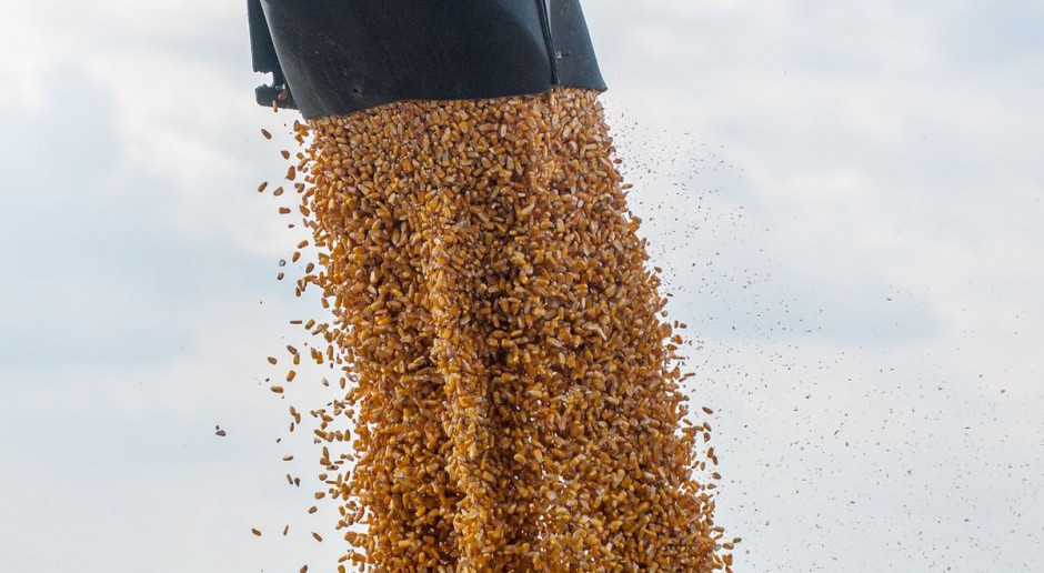 Spadek produkcji białka paszowego z powodu suszy w Unii Europejskiej