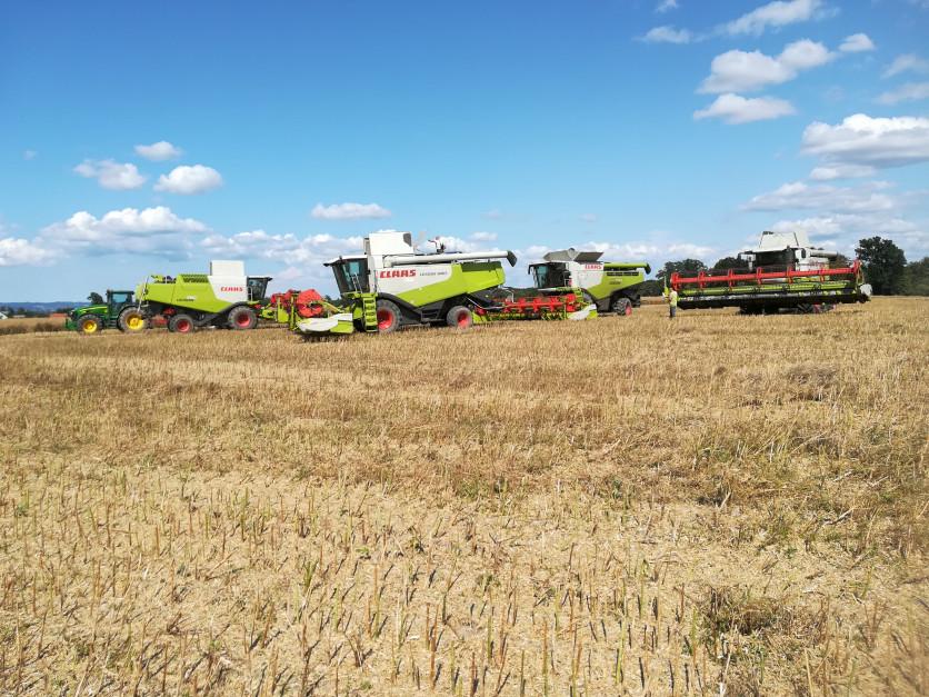 Rolnicy posiadają dziewięć kombajnów Claas Lexion, jak mówią priorytetem dla nich jest jak najszybsze wykonanie żniw.