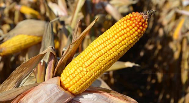 Konsultacje w kierunku połączenia dwóch firm nasiennych