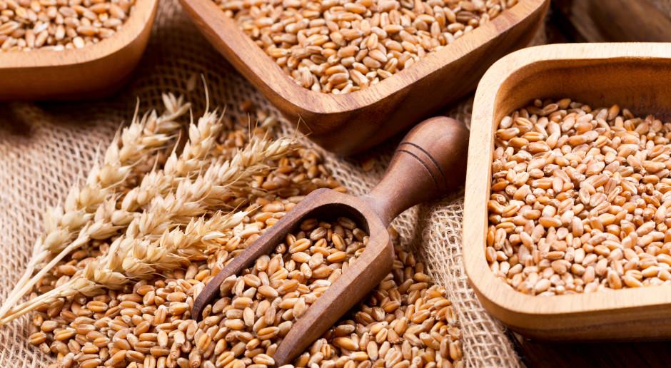 GUS: zbiory zbóż w tym roku wyniosą 34,5 mln ton