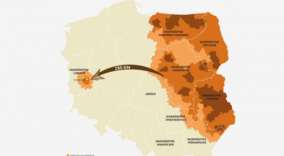 Wyznaczono strefy ASF na zachodzie Polski