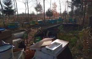 Ogień zniszczył kilkanaście uli i zabił mieszkające w nich pszczoły