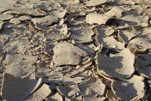 Jak agrotechnicznie zabezpieczyć się przed suszą?
