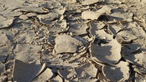 Przy tradycyjnej, płużnej uprawie gleba staje się skłonna do zaskorupiania; Fot. Katarzyna Szulc