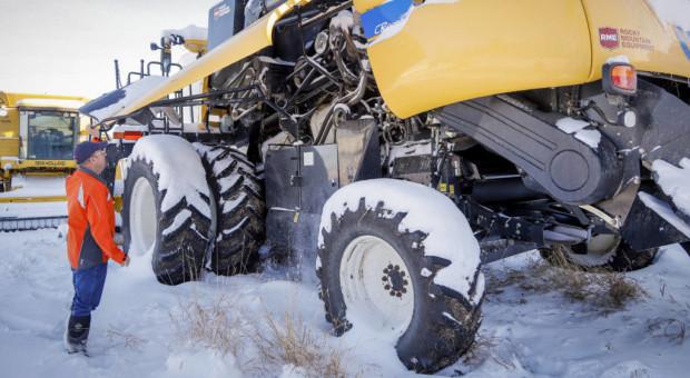 """""""Żniwa z piekła rodem"""" ponad 1 mln hektarów rzepaku w Kanadzie pod śniegiem"""