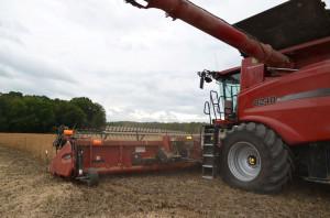 Zaglądając do opracowania CDR o/Poznań można przeczytać, że soja udaje się na większości gleb w Polsce z wyjątkiem gleb ciężkich, podmokłych, zlewnych, kwaśnych i bardzo lekkich, fot. ArT