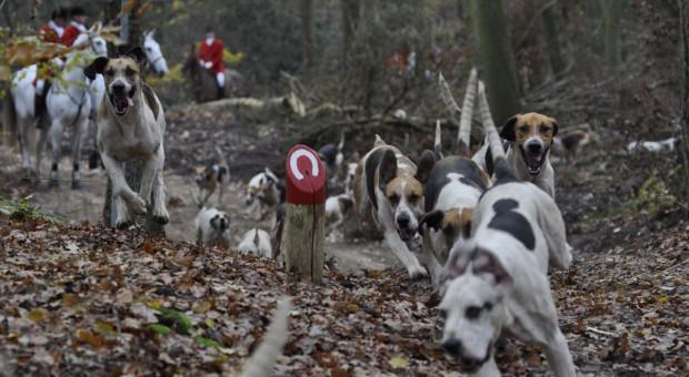 Kobieta w ciąży zagryziona w lesie przez psy myśliwskie