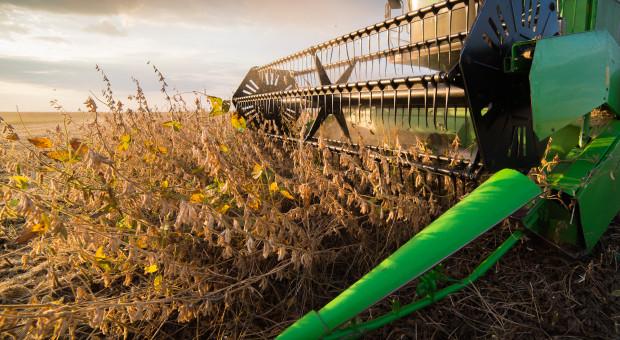 IGC: Stabilna prognoza światowej produkcji soi