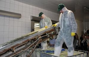 Mimo mechanizacji i automatyzacji produkcji, kapustę u Świniarskich zakisza się wciąż w tradycyjny sposób