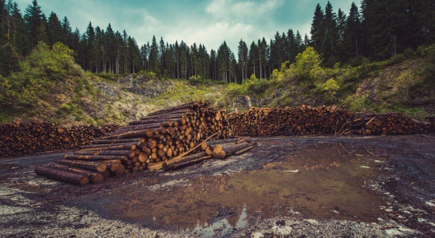 Nowe zasady sprzedaży drewna w Lasach Państwowych. Co się zmieni?