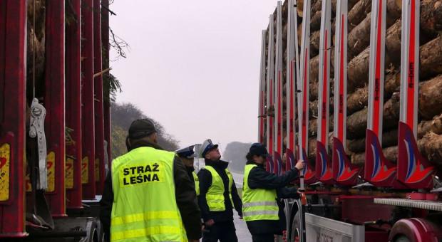 Transporty drewna do kontroli