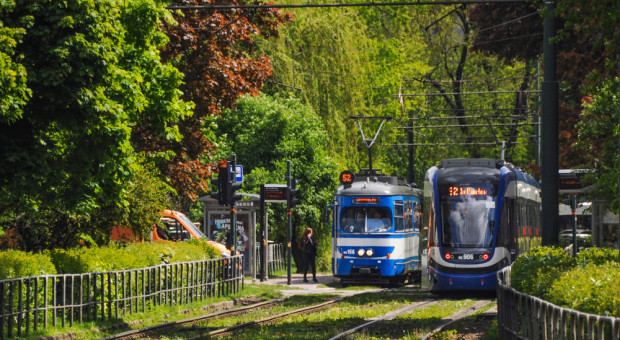 ZZM w Krakowie: pierwszy raz od wielu lat w takim tempie przybywa drzew
