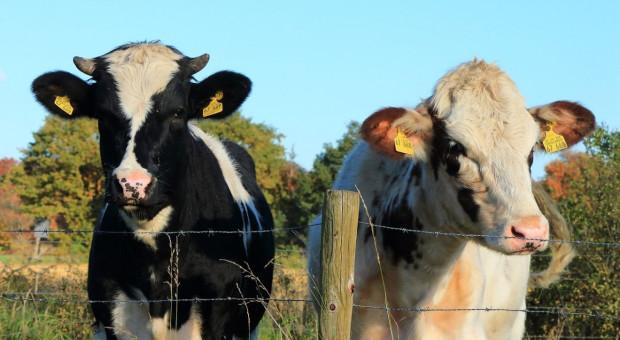 Średnia roczna produkcja a liczba posiadanych zwierząt w bazie IRZ