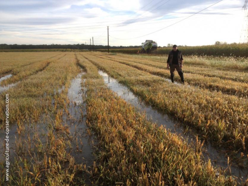 Pole w uprawie płużnej po zbiorze prosa. Po deszczu, woda nadal utrzymuje się na powierzchni. W tyle widać pracujący kombajn na polu Frédérica Thomasa.