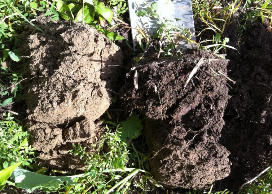 Próbki gleby, z lewej z pola pod orką, z prawej z pola uprawianego od 20 lat bez pługa.