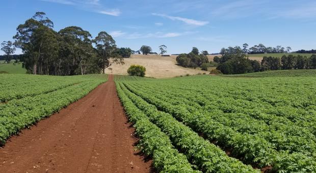 Australia będzie wspierać spółdzielczość rolniczą