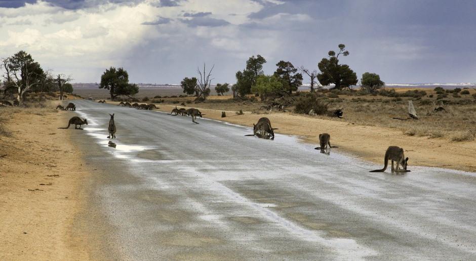 Australijska grudniowa prognoza produkcji roślinnej