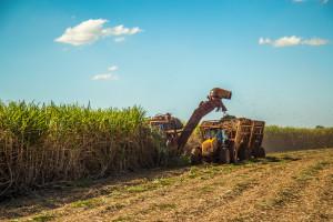 Spada światowa produkcja cukru