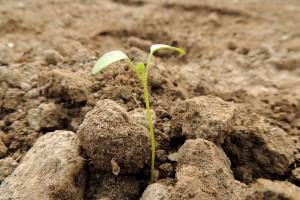Światowe ceny gruntów rolnych rosły o 12 proc. rocznie w ciągu ostatnich 16 lat