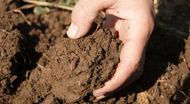 Dbając o glebę, dbasz o ludzkość