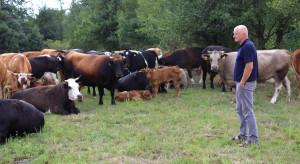 Jakie potrzeby zmian widzą hodowcy bydła mięsnego?