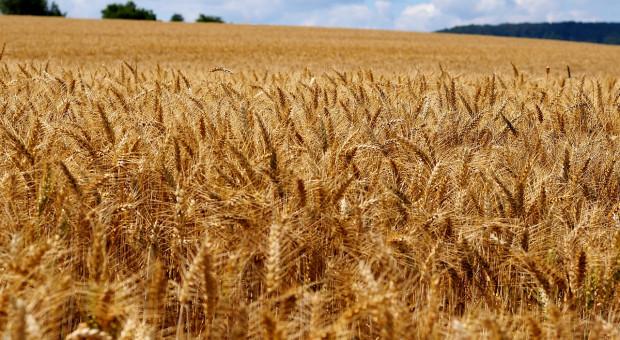 KE: Prognoza dla rynków roślin uprawnych do 2030 r.